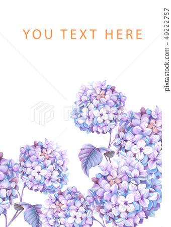 紫色的水彩绣球花花卉 49222757