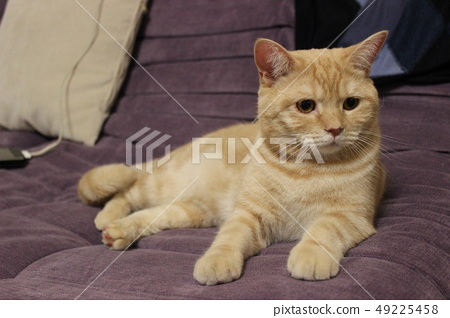 Portrait of a young red cat on the couch 49225458