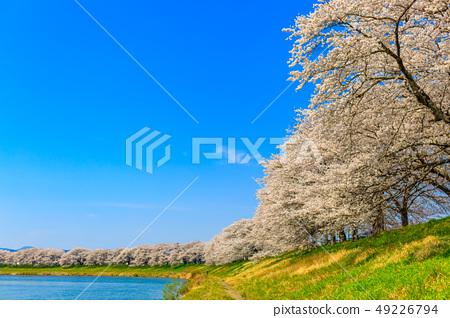 First glance Senbonzakura Ogawara 49226794