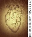Heart. The anatomical internal human organ. 49231117
