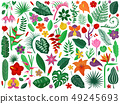 Rainforest Flowers and Leaves Collection 49245693
