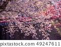 아오모리 히로사키 성 花筏 문의 해자에 뜬 벚꽃의 꽃잎 붉은 다리 下乗 다리 49247611
