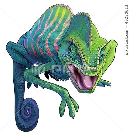 chameleon 49250613