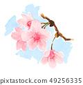 櫻花 櫻 賞櫻 49256335