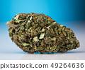 Medical Marijuana, cannabis, cbd Concept 49264636