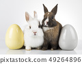 Little cute baby rabbit and easter eggs, white 49264896