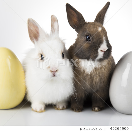 Little cute baby rabbit and easter eggs, white 49264900
