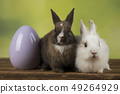 Easter animal holiday, eggs and green background 49264929