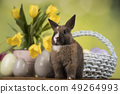 Little Bunny with easter eggs in flower 49264993