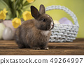 Baby bunny and egg on tulip flowers background 49264997