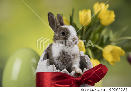 Little Bunny with easter eggs in flower 49265281
