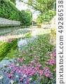 Mei flower algae 49286538