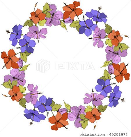 Vector Hibiscus floral botanical flower. Engraved ink art. Frame border ornament square. 49291975