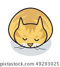 Hidamari-kun貓貓CAT Hinata Bokko寵物 49293025