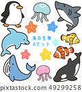 바다 생물 A 세트 49299258