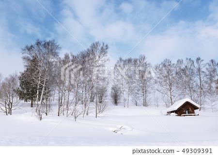 북해도 비에이 겨울 풍경과 숲 49309391