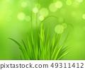 Frash Spring green grass background. Vector illustration 49311412