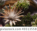 beautiful dried flower and green succulents 49313558