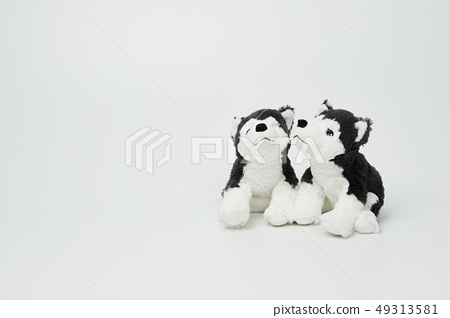 흰색 배경위에 있는 강아지 인형  49313581