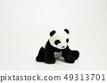 熊貓坐白色背景 49313701