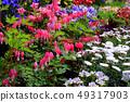 Flower of tightspeare 49317903
