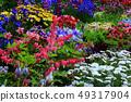 Flower of tightspeare 49317904