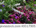 Flower of tightspeare 49317905