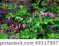 Flower of tightspeare 49317907