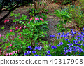 Flower of tightspeare 49317908