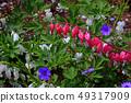 Flower of tightspeare 49317909