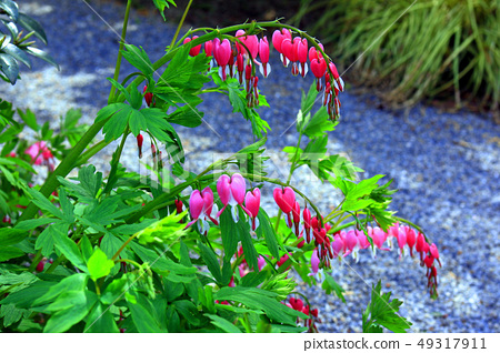 Flower of tightspeare 49317911