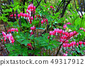 Flower of tightspeare 49317912