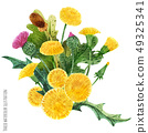 Scottish wild plants boutonniere 49325341