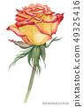 Yellow Caribbean Rose 49325416
