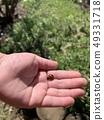 我找到了一隻瓢蟲 49331718