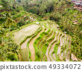 Drone view of Tegalalang rice terrace in Bali, Indonesia, with palm trees and paths for touristr to 49334072