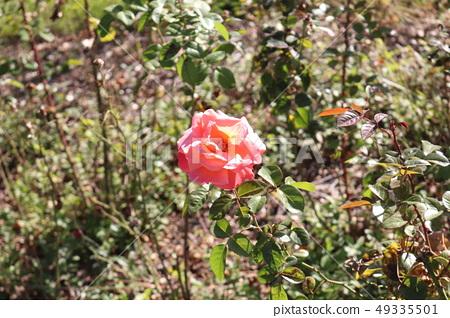 꽃 49335501