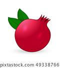 Vector hand drawn pomegranate. 49338766