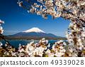 ภูเขาไฟฟูจิ,ทะเลสาบ,ซากุระ 49339028