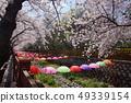 진해 벚꽃 우산 49339154