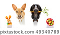 easter bunny dogs 49340789