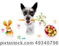 easter bunny dog 49340796