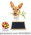 easter bunny dog 49340803