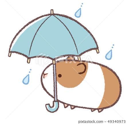 傘架豚鼠 49340973