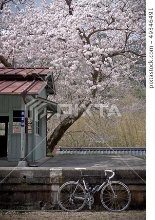 片鉄 낭만 가도 벚꽃과 검은 자전거 49346491