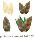 bambooshoot 49347877