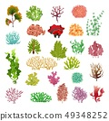 Coral and seaweed. Underwater flora, sea water seaweeds aquarium game kelp and corals. Ocean plants 49348252