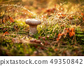 Mushroom Boletus In a Sunny forest in the rain. 49350842