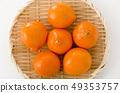 Mineola Orange 49353757