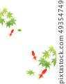夏天问候金鱼槭树背景 49354749
